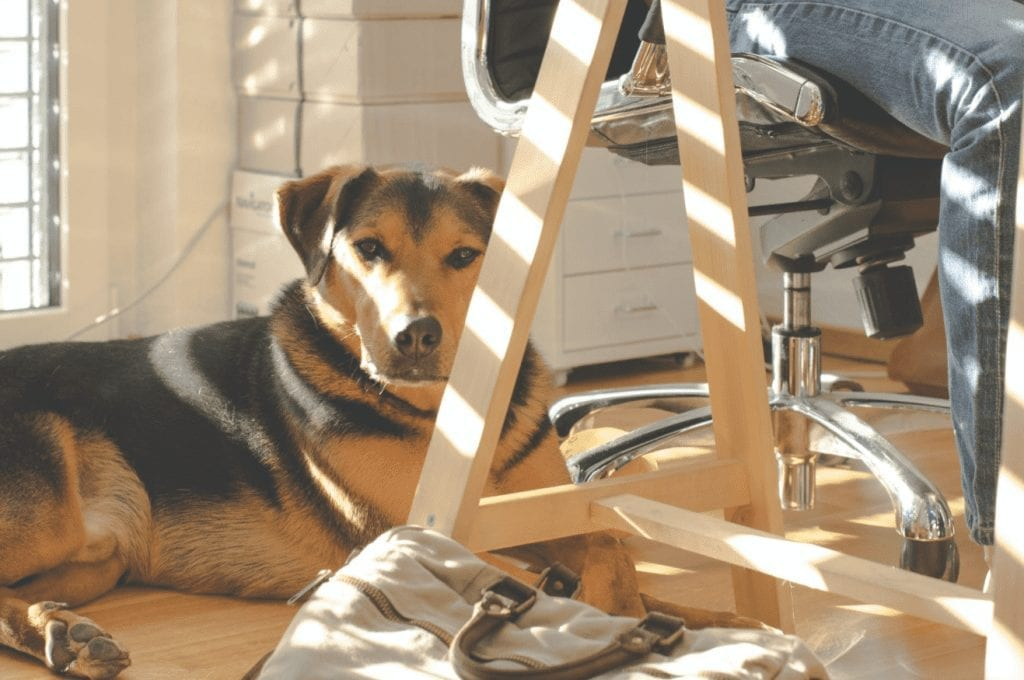 Best Practices for Taking Your Dog to Work Best Practices for Taking Your Dog to Work